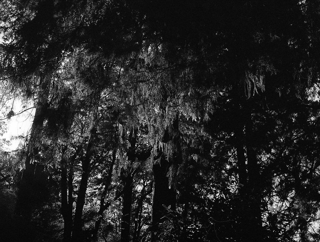 treesbwweb.jpg